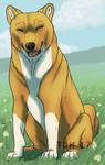 Orange doggo by TheDarkHyena