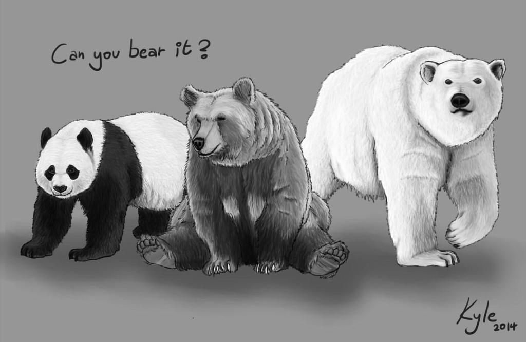 Bear Bear Bear by DC-KMOS