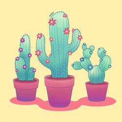 Cacti by noorin