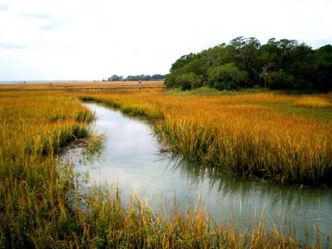 Tidal Marsh - Shem Creek, SC