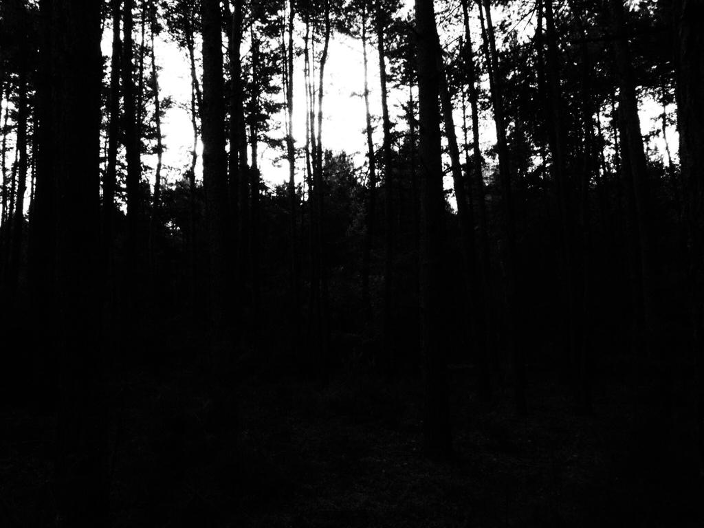 BW forest by Isaaca