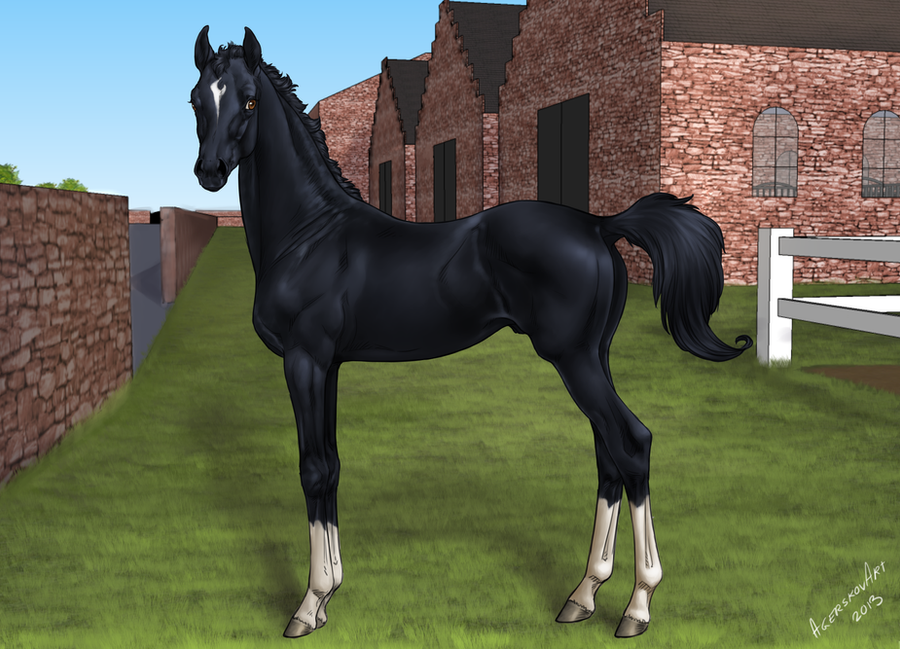 Rambau - foal ref 2013 by BaliroAdmin