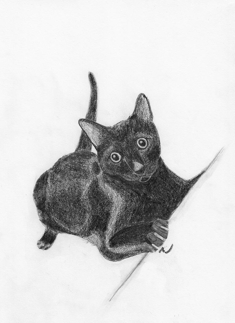 kitty by midevil