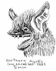Bat Morthern Myotis