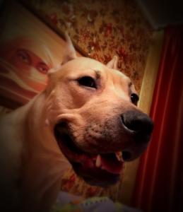 DemonSD's Profile Picture