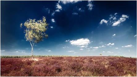 Summerday in Holland by MOSREDNA