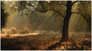 nice morning by MOSREDNA