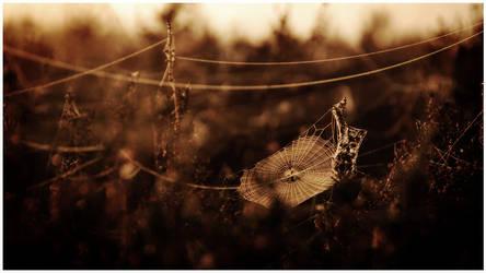 Web by MOSREDNA