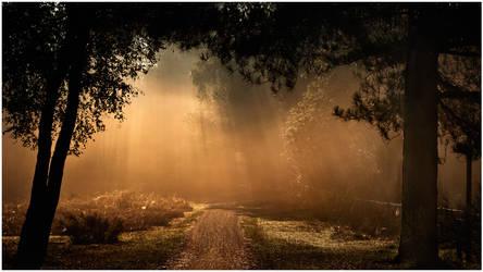 Misty Path by MOSREDNA