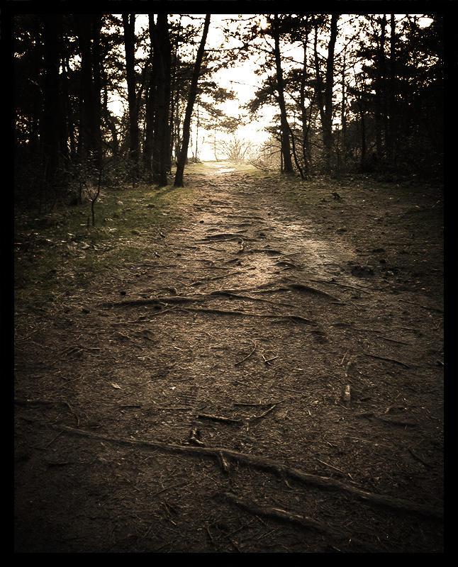 Dark forest trail... by MOSREDNA