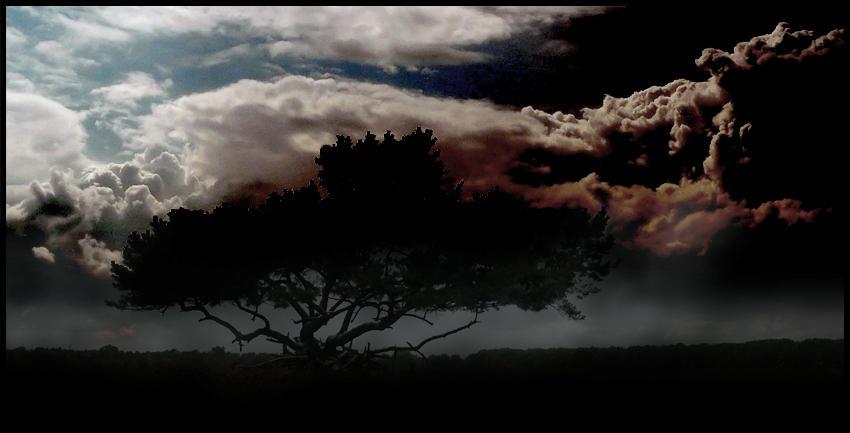 Creepy tree... by MOSREDNA
