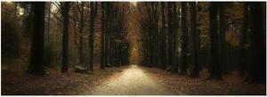 Autumn road ...