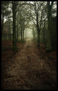 Dark road ...