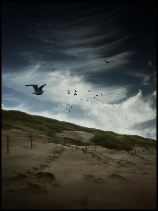 Dutch dunes ... by MOSREDNA
