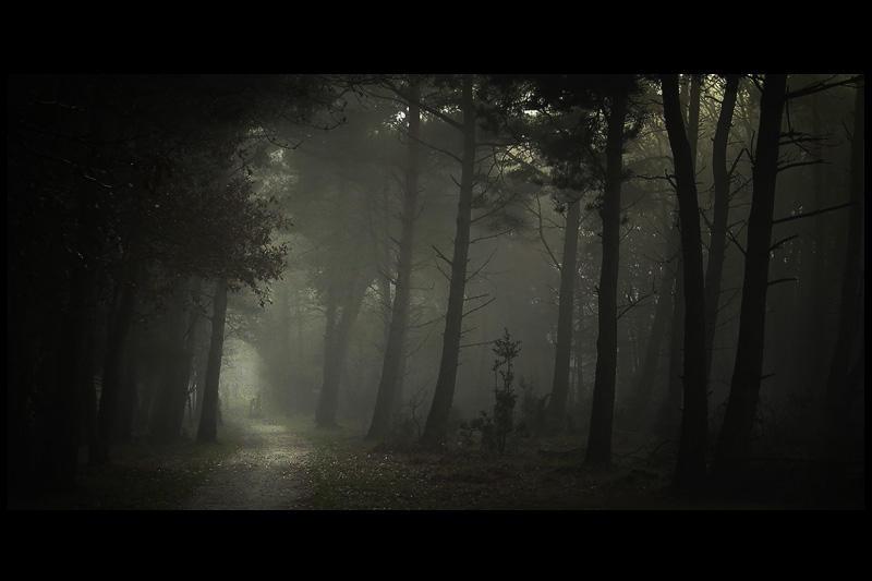 Morning fog ... by MOSREDNA