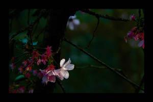 Spring flower ... by MOSREDNA