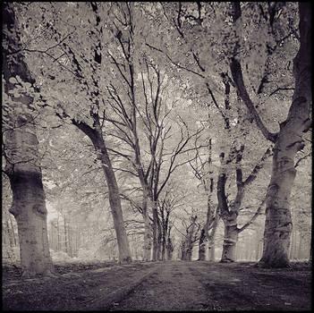 Trees ... by MOSREDNA