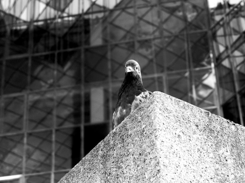 Observing by lokitsune