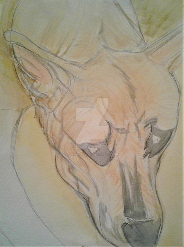 Kuna watercolor by JesseVanSciver