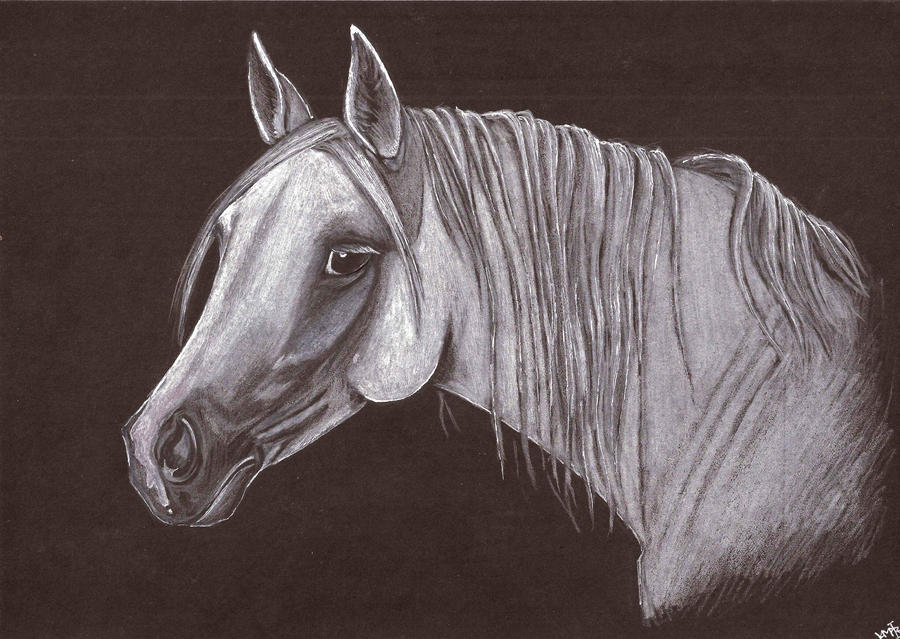 Horse on black paper. by AlbinoNightmare