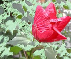 FlowerZ by Kato-Shiroi