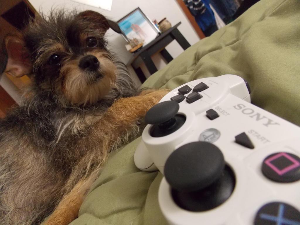 gamer dog by kayla kaye on deviantart