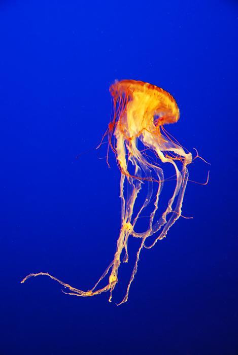 Jellyfish by frankworthstopple