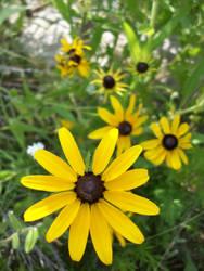 yellow spinwheel