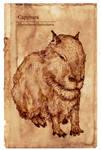 Capybara -Hydrochoerus hydrochaeris-