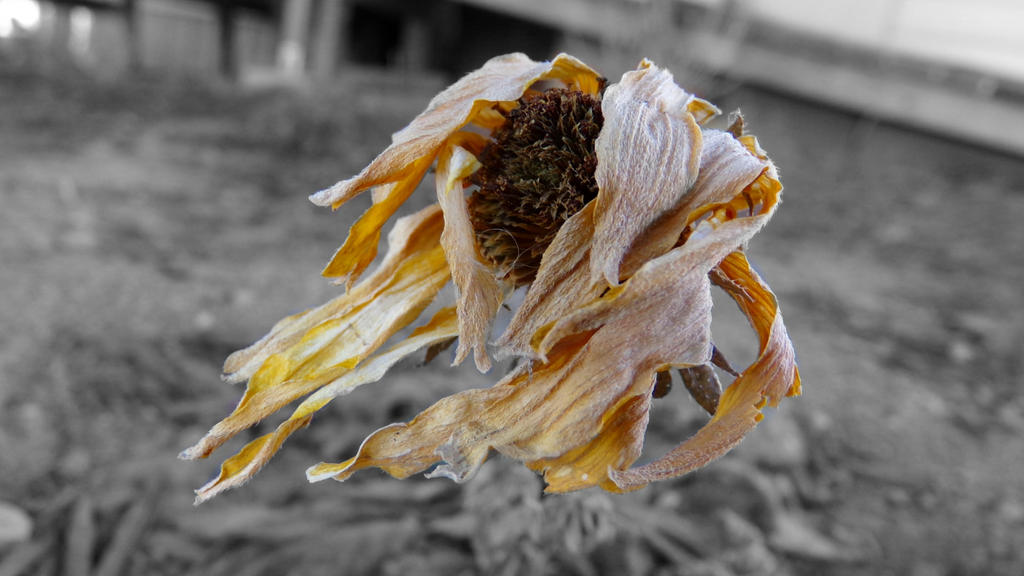 Dried Flower by dubkat