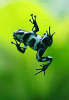 _Frog_ by Aikya