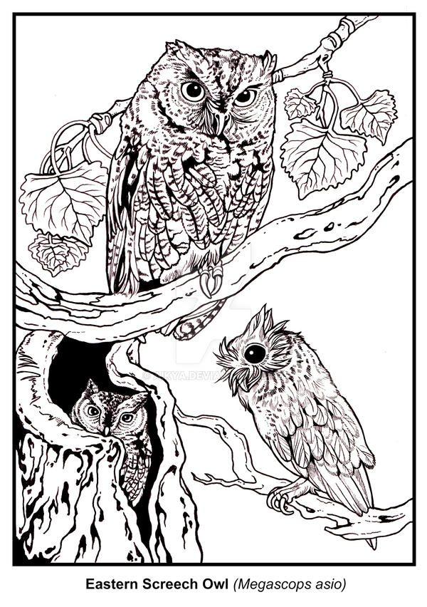 how to draw a screech owl