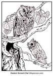 _Eastern Screech Owl Lineart_