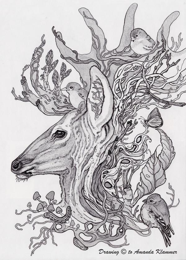 Forest Ecosystem By Aikya On Deviantart
