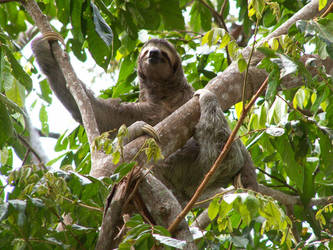 sloth by phattony227