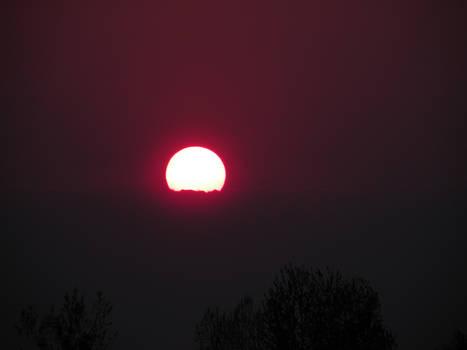 Amaranth Sunset