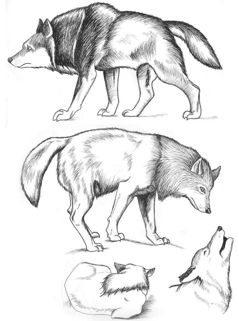 Wolf Studies by Inkwerk