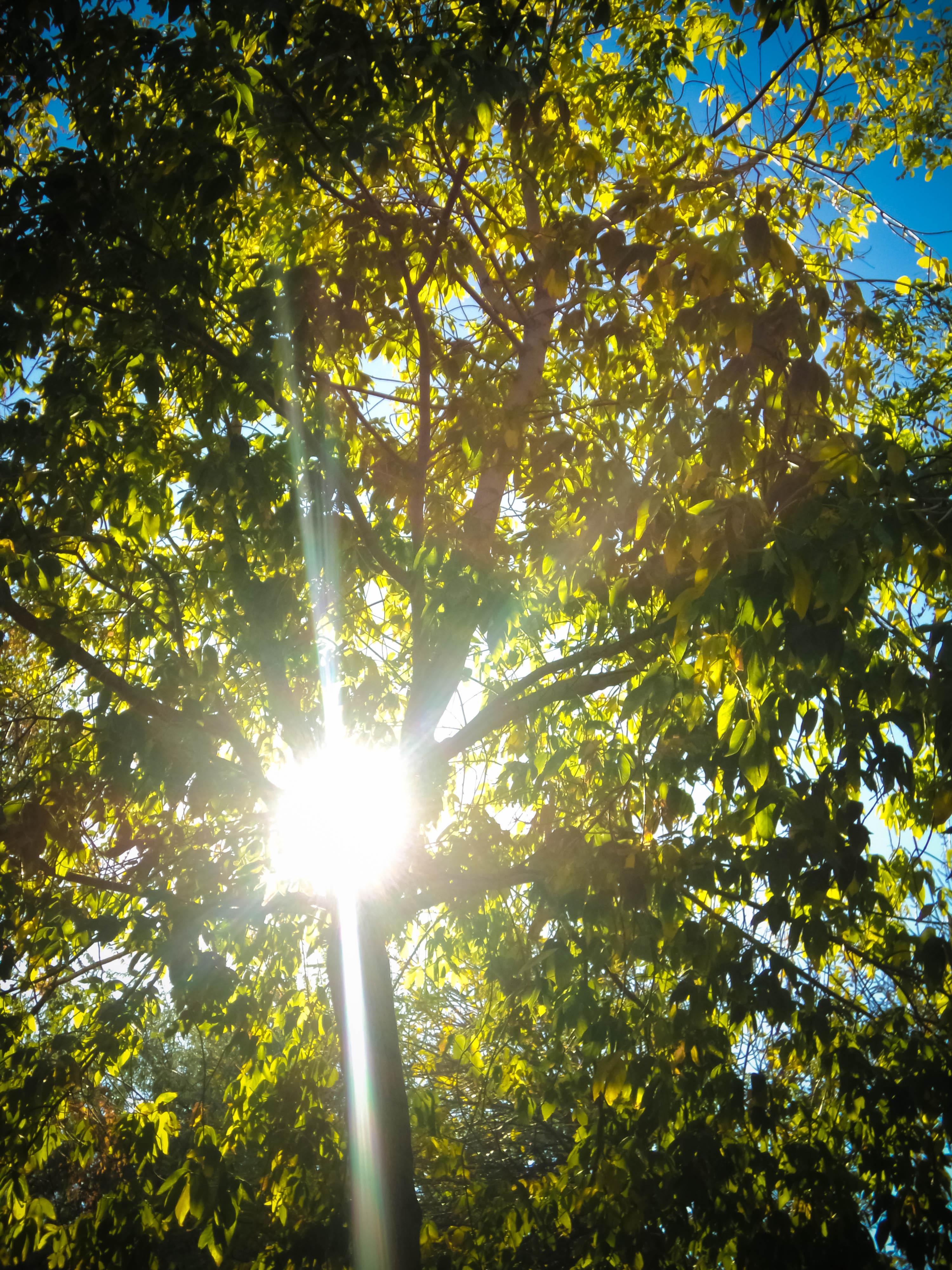 Sunlight by MadalinaGulerez