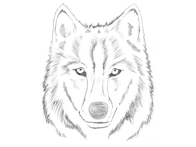 how to draw a wolf head simple