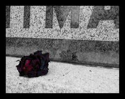 Rose for the Dead