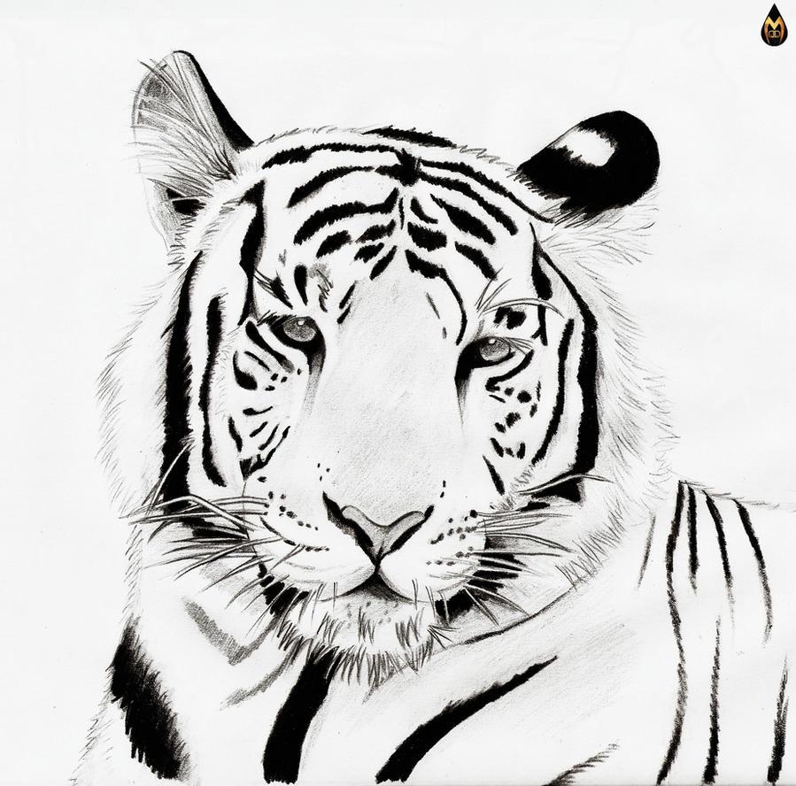 Line Drawing Tiger : White tiger line art