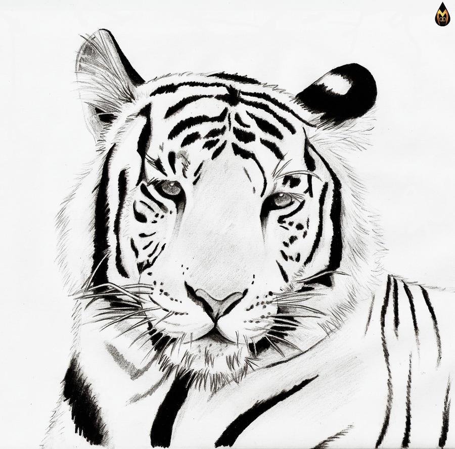 White Tiger by Maurael on DeviantArt