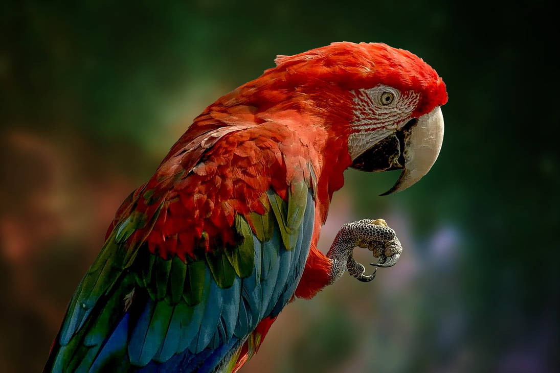 Parrot-The Colour Palate