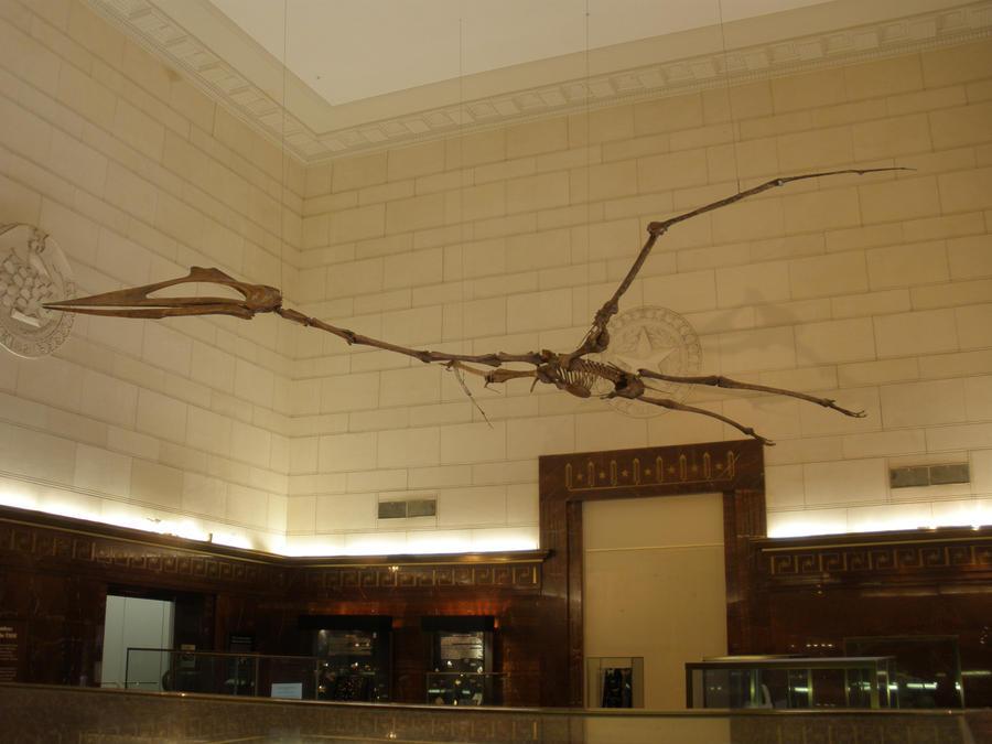 http://fc08.deviantart.net/fs70/i/2011/065/0/2/quetzalcoatlus_by_symbion_pandora-d3b3cz7.jpg