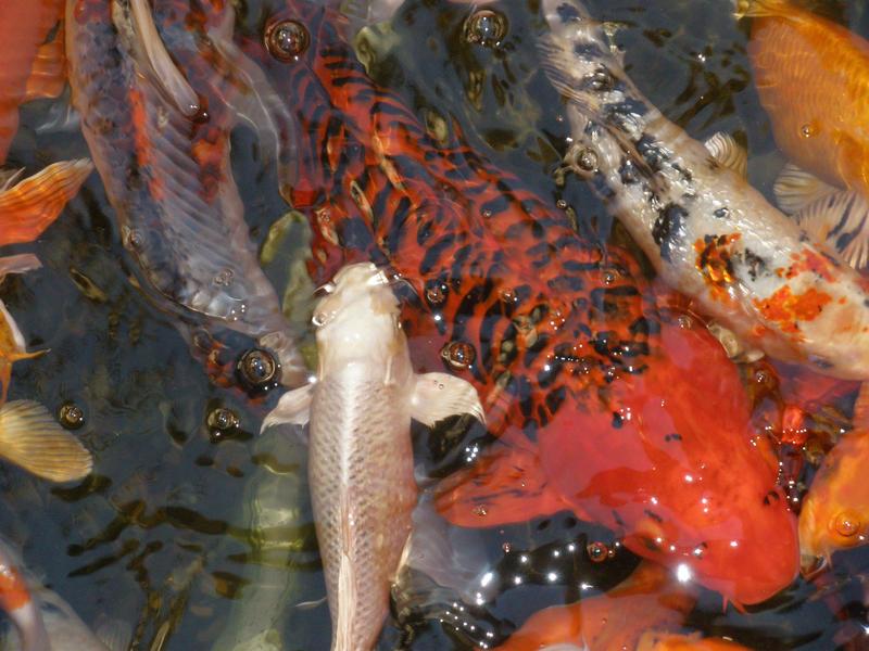 Big red 2 by symbion-pandora