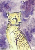 ATC Cheetah