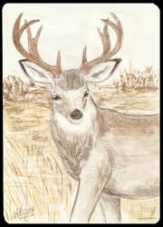 ATC Mule deer by Haawan