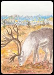 ATC Reindeer by Haawan