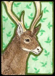 ATC Thorold's deer by Haawan