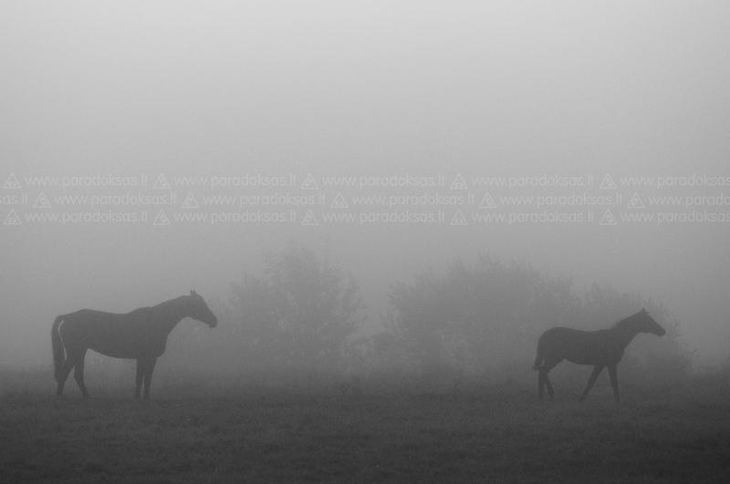 Mist by amisiux